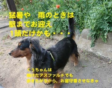 IMG_9627_20140718205319c6e.jpg