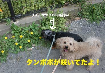 IMG_9638.jpg