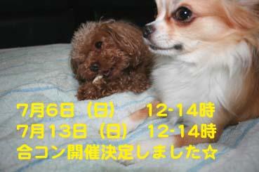 IMG_9935.jpg