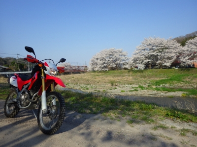 山の上の桜 (1)