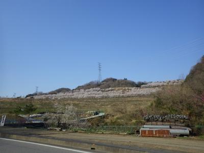 山の上の桜 (2)
