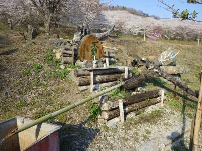 山の上の桜 (4)