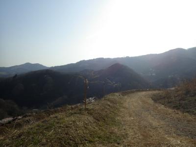 山の上の桜 (7)
