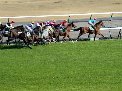 中日新聞杯で走る馬たち