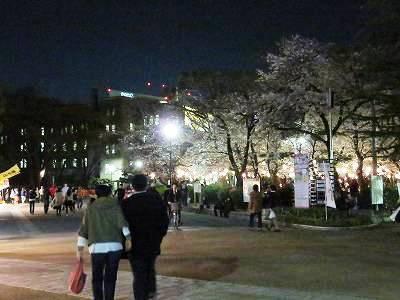 鶴舞公園の夜桜