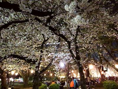 夜桜と花見客