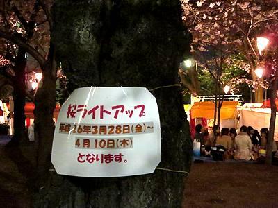 桜ライトアップ期間の掲示