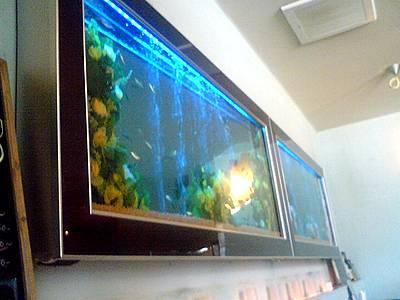九州九州店内の水槽