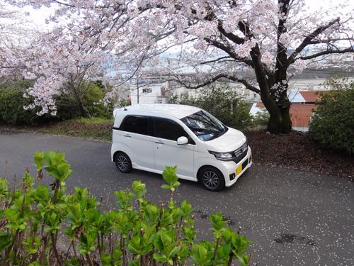 エヌワゴン桜1