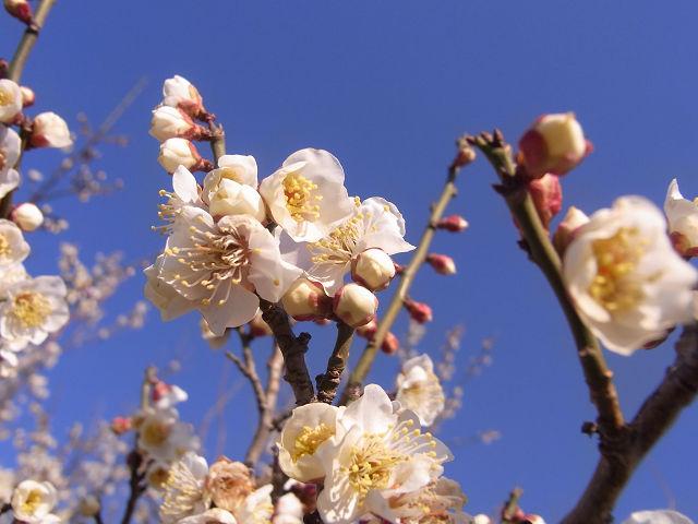 春の訪れ・・