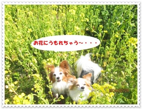 IMG_2587.jpg