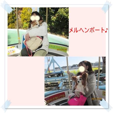 cats_201403092315173d5.jpg