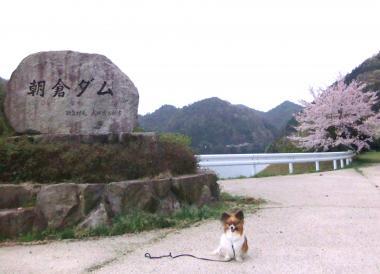 朝倉ダム2