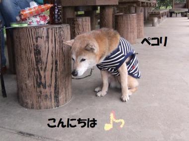 五郎君こんにちは