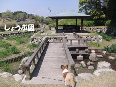 菖蒲園ラブ