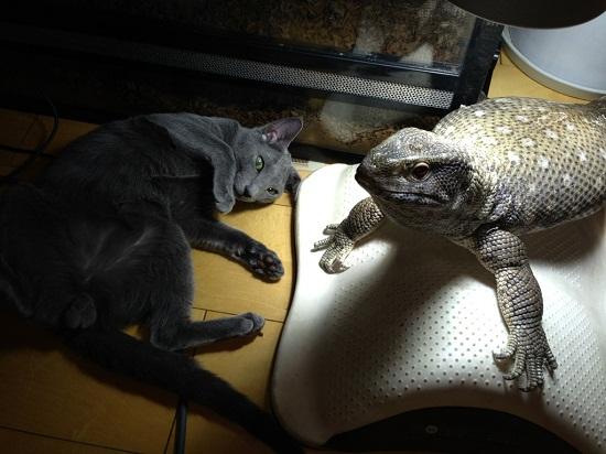 1●トカゲのリリー&ロシアン