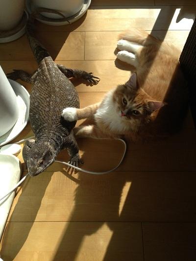 ●トカゲ&ラガマフィン2