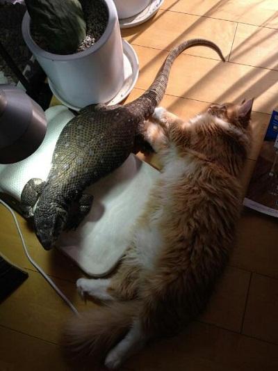 とかげとネコ③
