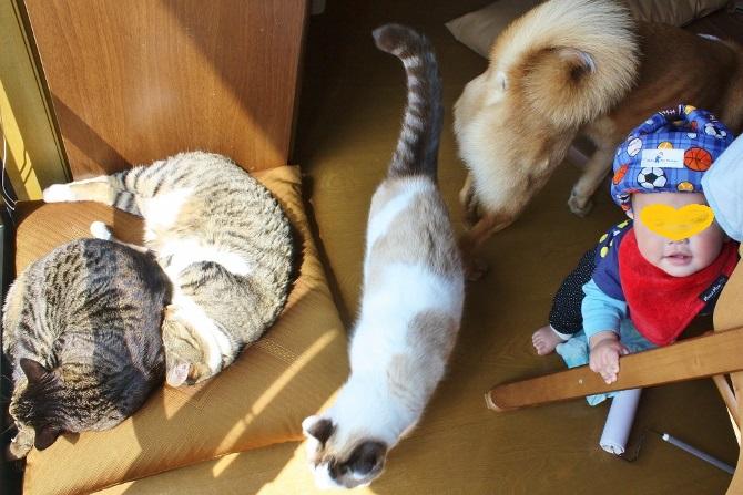 タラに猫3と息子氏