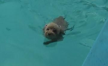 ティアラ泳ぐ