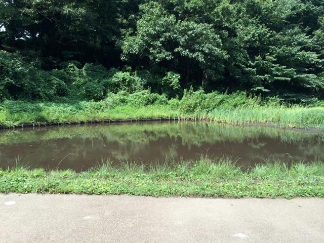 アンデルセン公園の池