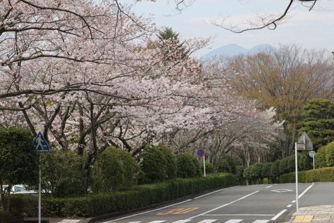 1403美術館前の桜