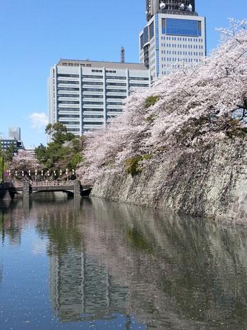 1404お堀の桜