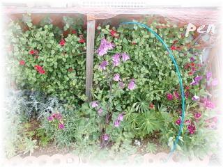 赤い花壇・右