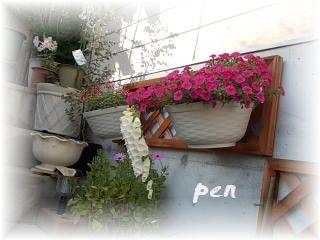 カリブラコア花