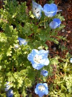 my-garden 011