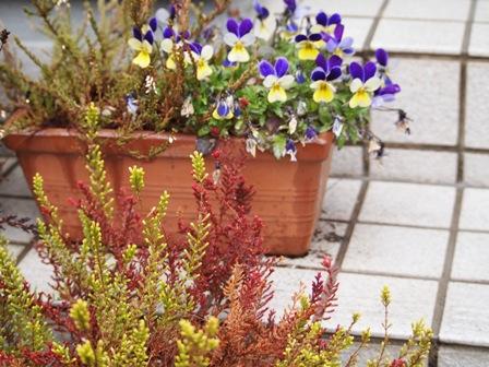 my-garden 044