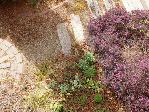 my-garden 105