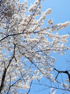my-garden 012 (5)