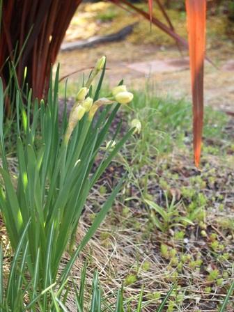 my-garden 163
