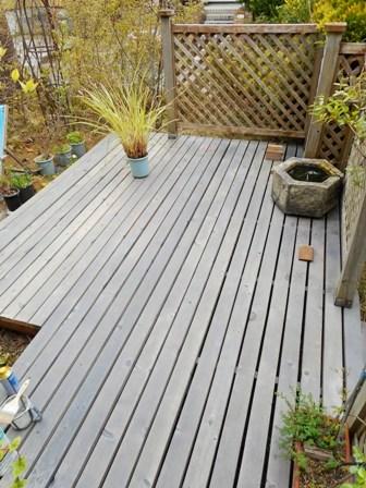 my-garden 039 (2)