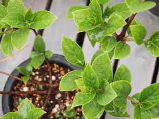 my-garden 053 (2)