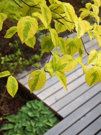 my-garden 002 (3)
