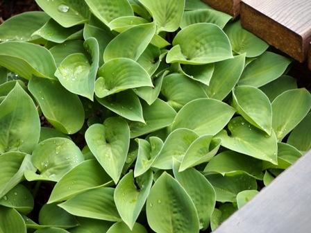 my-garden 005 (5)