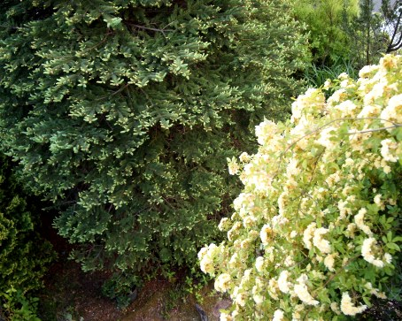my-garden 112