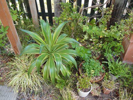 my-garden 067