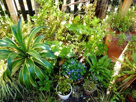 my-garden 103