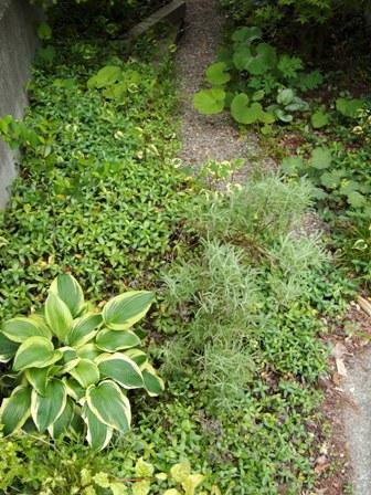 my-garden 148
