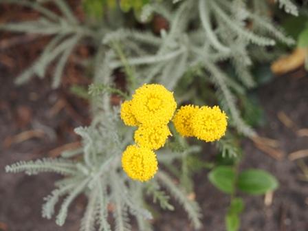 my-garden 071 (3)