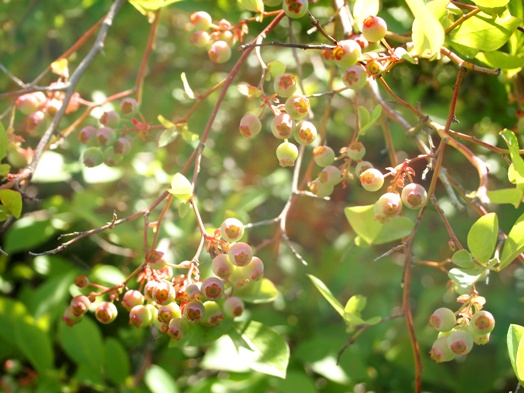 my-garden 023 (2)