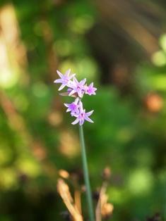 my-garden 011 (4)