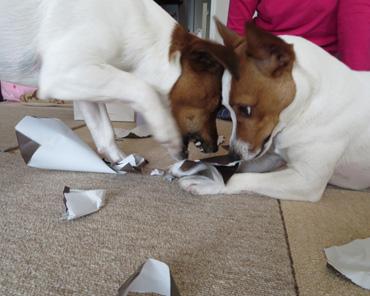 2月9日包装紙を破く遊び1