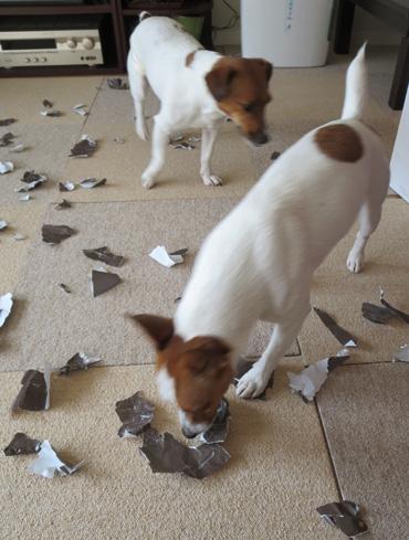 2月9日包装紙を破く遊び2