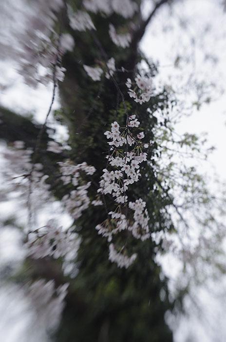 140404-4.jpg