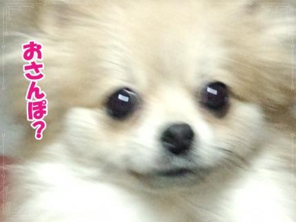 20140513きらら②