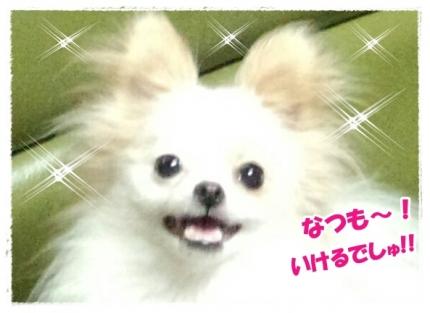 20140513なつ①